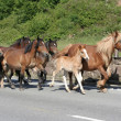 Horses on the road — Stock Photo