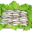 Fresh sardines — Stock Photo #12766337