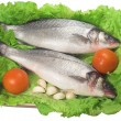 Stock Photo: Bass (fish)