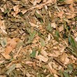 Garden mulch — Stock Photo