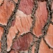 Tree bark background texture — Stock Photo #12742640