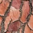 Tree bark background texture — Stock Photo #12742640