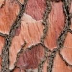 Tree bark background texture — Stock Photo