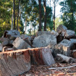 Stock Photo: Pile of cut firewood in forest clearing