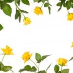 Rose flower stationery border — Stock Photo
