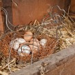Stock Photo: Chicken eggs in basket in straw