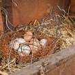 Chicken eggs in basket in straw - Stock Photo