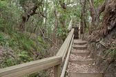 Walking track through environmentally sensitive forest — Stock Photo
