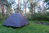 Camping tent in forest — Stock Photo