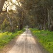 Australian rural dirt road landscape — Stock Photo
