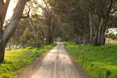 Australian rural dirt road landscape — Fotografia Stock