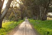 Australian rural dirt road landscape — Stock Photo