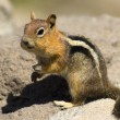 Stock Photo: Wild Chipmunk