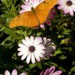 Stationary Butterfly — Stock Photo