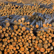 Stock Photo: Lumber Mill Log Pile