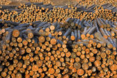 Lumber Mill Log Pile — Stock Photo