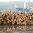 Logging Shipyard - Stock Photo
