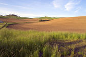 Farmland of The Palouse Washington State Agriculture — Stock Photo