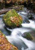 Munson Creek Water Flowing Over Rock Fall Leaves — Stock Photo
