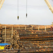 Loading Logs - Stock Photo