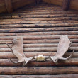 Stock Photo: Moose Antlers on Log Cabin Outdoor Alaska