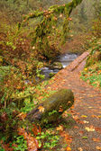 Leaves Fall in Autumn on a Trail in the Rainforest — Stock Photo