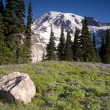 Stock Photo: Majestic Snowcapped Mountain Peak Mt. Rainier Wildflowers Cascade Range