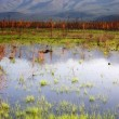Stock Photo: Scenic Marsh Water Panoramic Mountain Landscape Outback Alaska