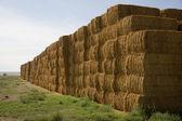 Hay Bales in Huge Stack on Corner of Farmers Field Farm Staple — Stock Photo