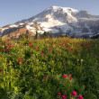 Late Summer Wildflowers Mt. Rainier National Park Skyline Trail — Stock Photo