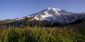 Late Summer Wildflowers Mt. Rainier National Park Skyline Trail — Stock Photo
