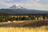 Golden Grassland Countryside Mount Adams Mountain Farmland Lands — Stock Photo