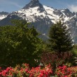 Whitehorse Mountain Rhododendrons Cascade Mountains Washington — Stock Photo #31065055