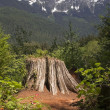 Overlook at Cut Tree Stump North Cascade Mountains Washington — Stock Photo