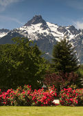 Whitehorse Mountain Rhododendrons Cascade Mountains Washington — Stock Photo
