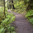 Trail to Punch Bowl Falls Oregon Forest Northwest — Stock Photo