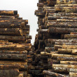 Tree Log Sections Laying Stacked Lumber Yard Sawmill Wood Storage — Stock Photo