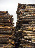 Tree Log Sections Laying Stacked Lumber Yard Sawmill Wood Storage — Stock Photo