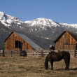 Livestock Horse Grazing Natural Wood Barn Mountain Ranch Winter — Stock Photo