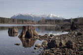 Tree Stumps Rattlesnake Lake Mount SI North Cascade Mountains — Stock Photo