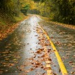 Wet Rainy Autumn Day Leaves Fall Two Lane Highway Travel — Stock Photo #32366373