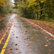 Wet Rainy Autumn Day Leaves Fall Two Lane Highway Travel — Stock Photo