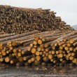 Stock Photo: Lumber Mill Log Pile Wood Tree Trunks Waiting for Processing