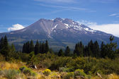 Hot Summer Day Weed California Base Mount Shasta Mountain Cascade Range — Stock Photo