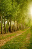 Farm Field Path Leads into Distance Along Tree Row Sunlight — Stock Photo