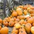 Farm Scene Old Wagon Vegetable Pile Autumn Pumpkins October — Stock Photo