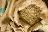 Raw Coffee Seeds Bulk Burlap Bag Agriculture Bean Produce — Stock Photo