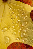 Clear Dew Water Precipitation Droplets Drops Laying Autumn Leaves — Zdjęcie stockowe