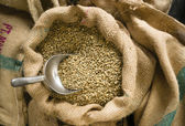 Raw Coffee Seeds Bulk Scoop Burlap Bag Agriculture Bean — Stock Photo