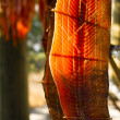 King Salmon Fish Meat Catch Hanging Native American Lodge Drying — Stock Photo